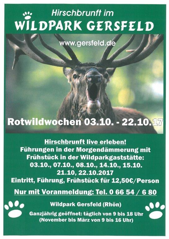 Hirschbrunft im Wildpark Gersfeld
